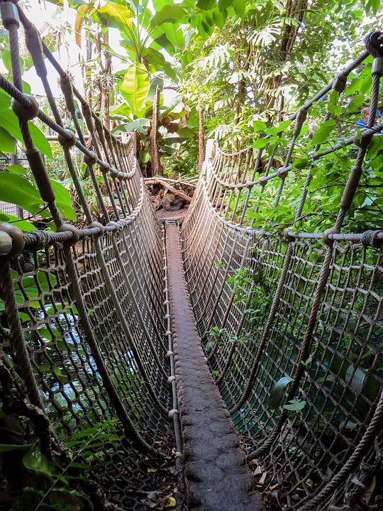 Rimba Hutan Jembatan Gantung - Foto gratis di Pixabay