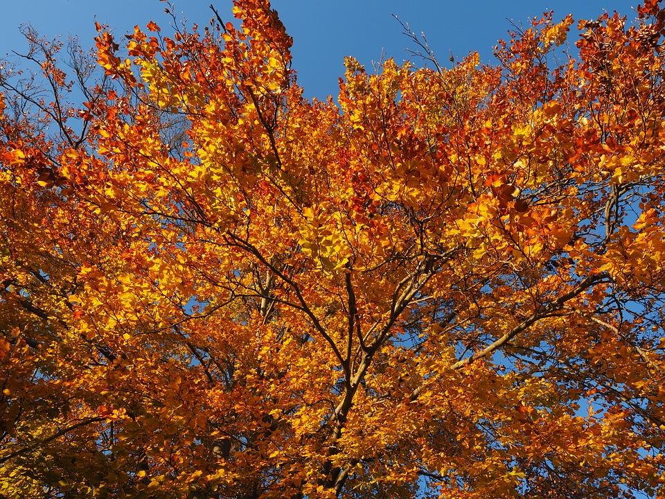Imagini pentru imagini cu frunze pe ramuri