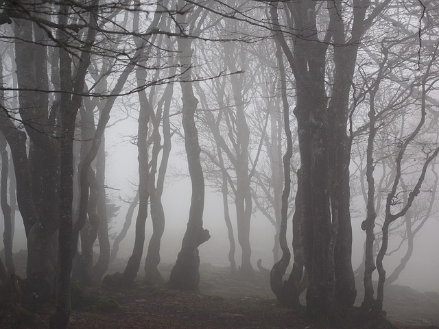 Free Photo Beech Wood Fog Forest Trees Free Image On