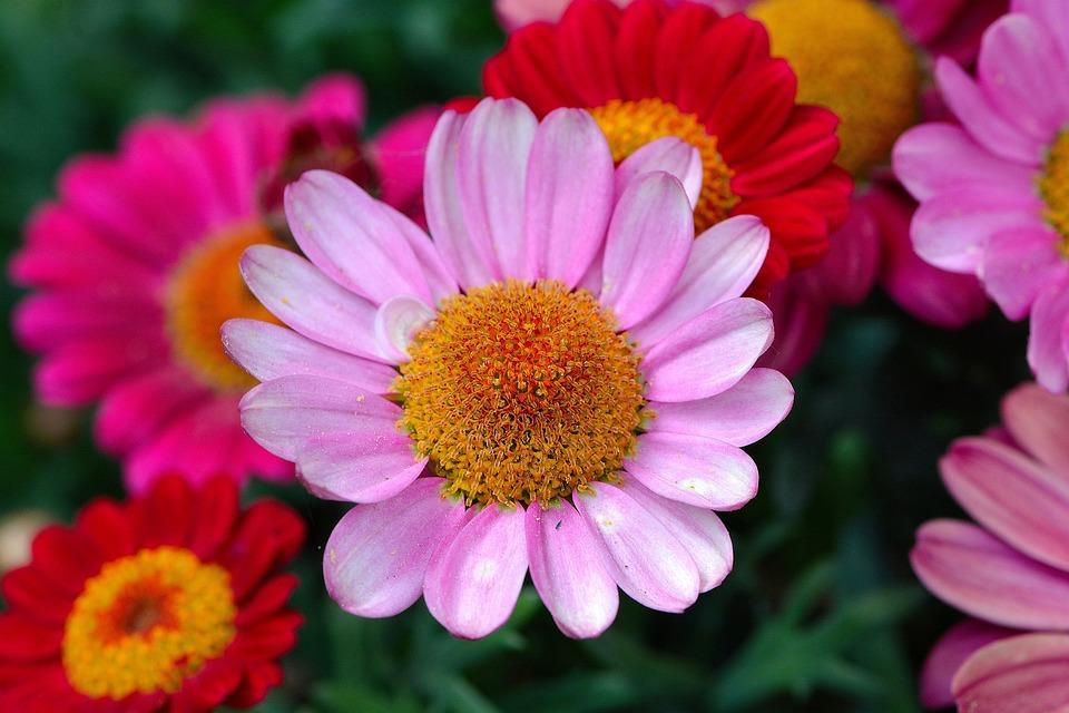 verkkosivusto alennus vakaa laatu koko 7 Huopa Kukka Kukat - Ilmainen valokuva Pixabayssa