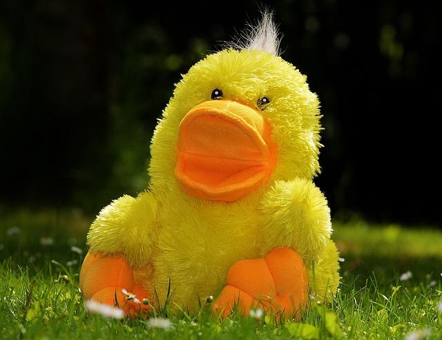 Dog Toy Ducks Screaming