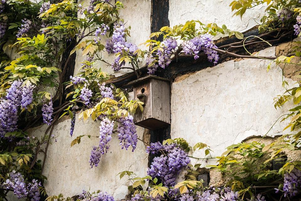 植物・花別の藤の花言葉の意味と由来