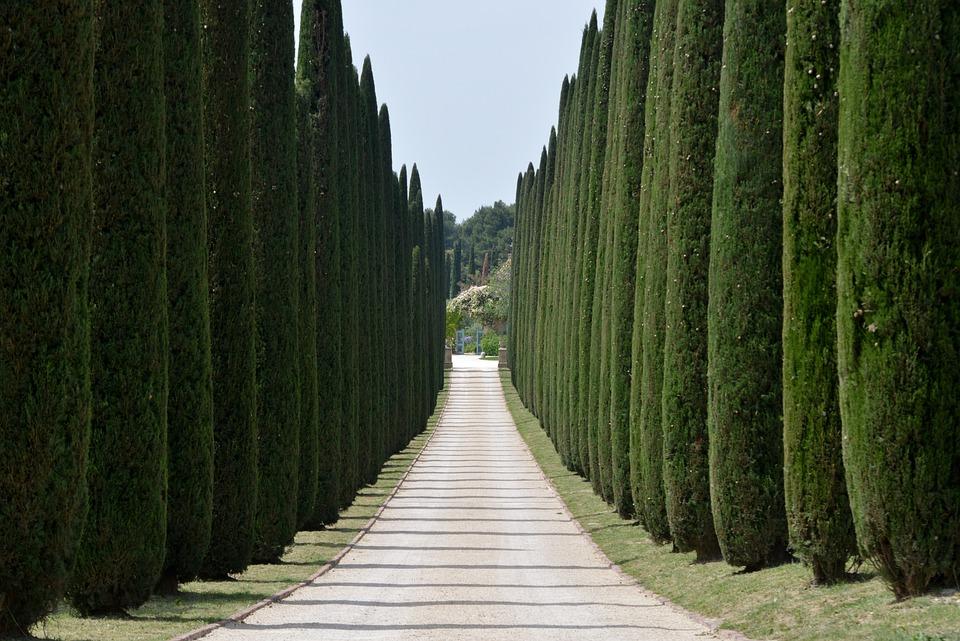 cypresses avenue driveway free photo on pixabay