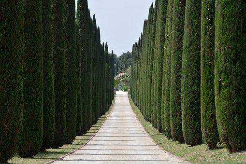 Cypresses Avenue Driveway Trees Access Dri