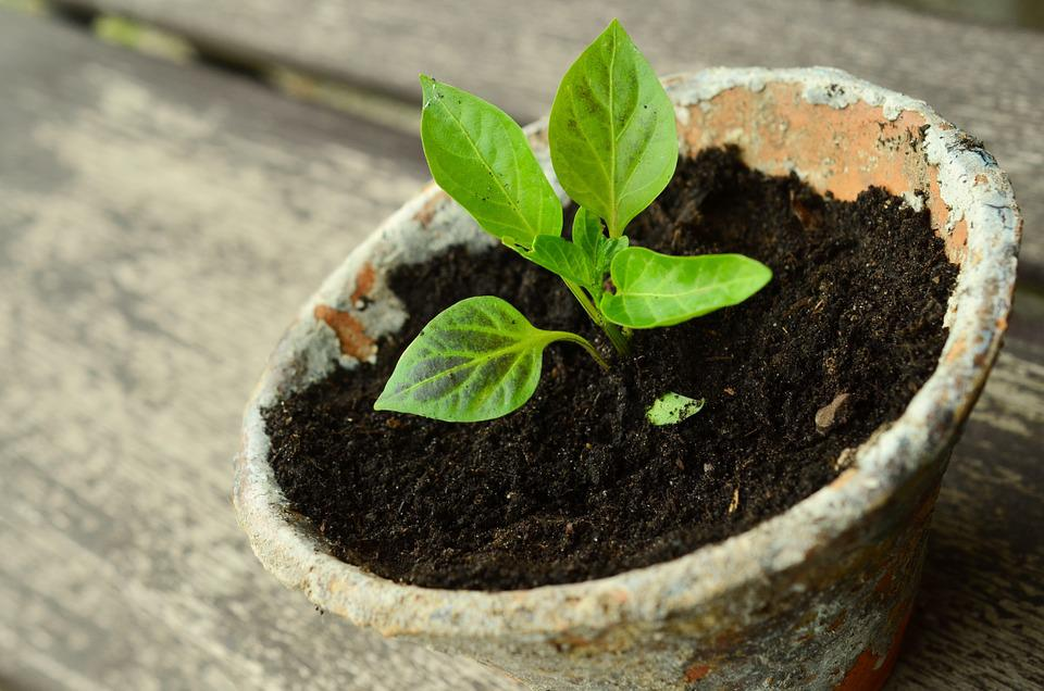 young plant free images on pixabay