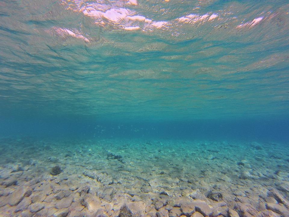 Free Photo: Diving, Underwater, Nature, Lake