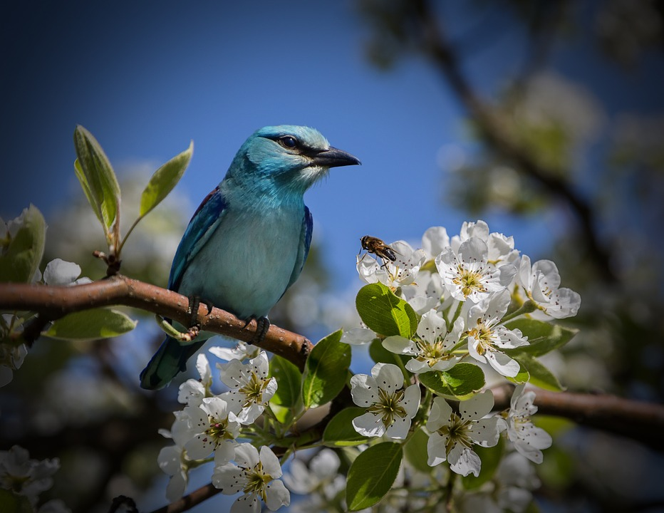free photo  bird  blue  mood  close  nature - free image on pixabay