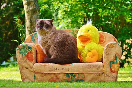 Mieze, Couch, Sofa, Duck, Cat