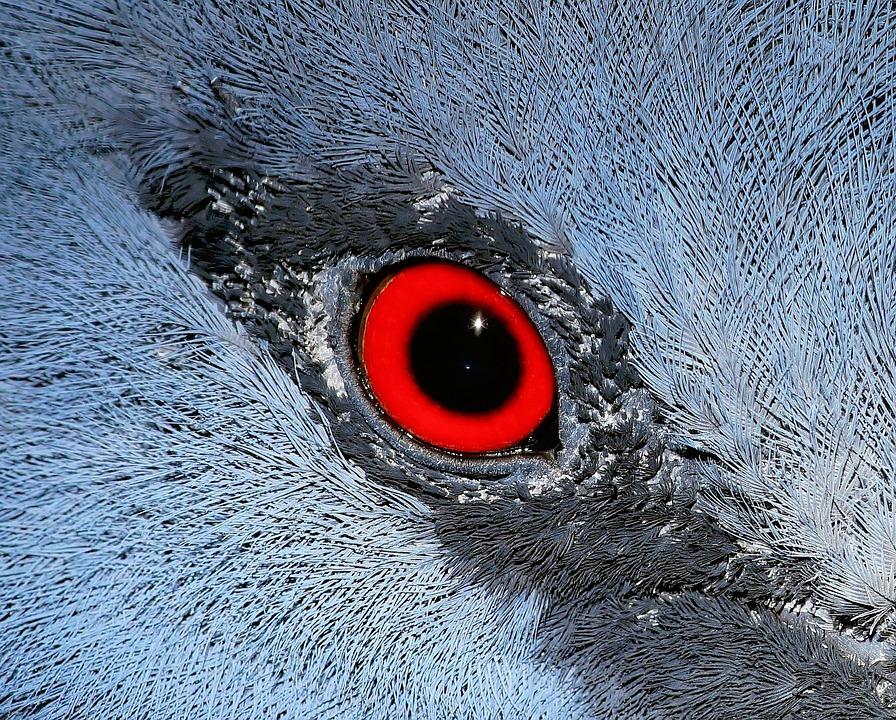 Eye Macro Bird Fan Deaf Close Up Nature Mirroring