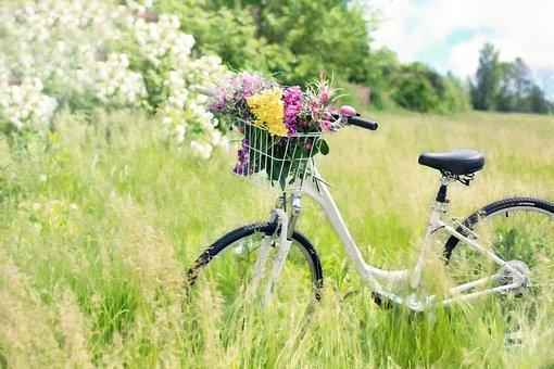 Bicycle, Meadow, Flowers, Grass, Bike