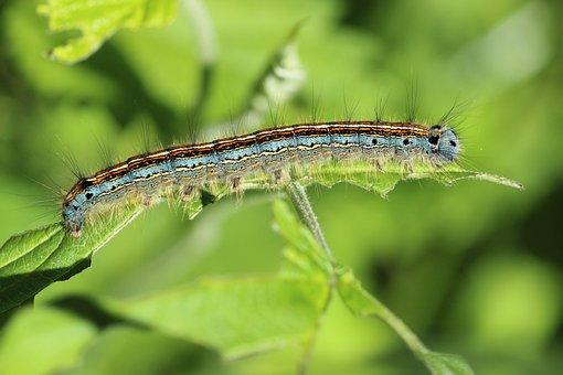 Caterpillar Images  U00b7 Pixabay  U00b7 Download Free Pictures