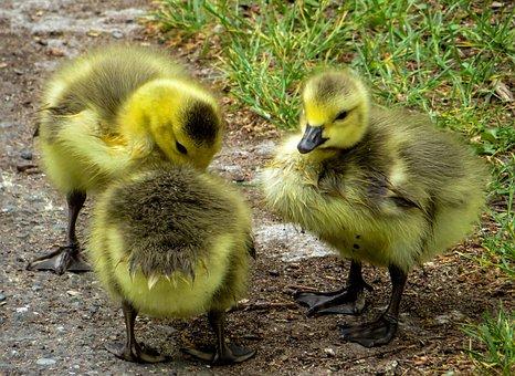Frühling Bilder Pixabay Kostenlose Bilder Herunterladen