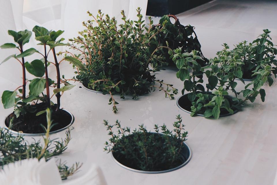 Plantas, Hierbas, Naturales, Verde, Fresco, Orgánicos