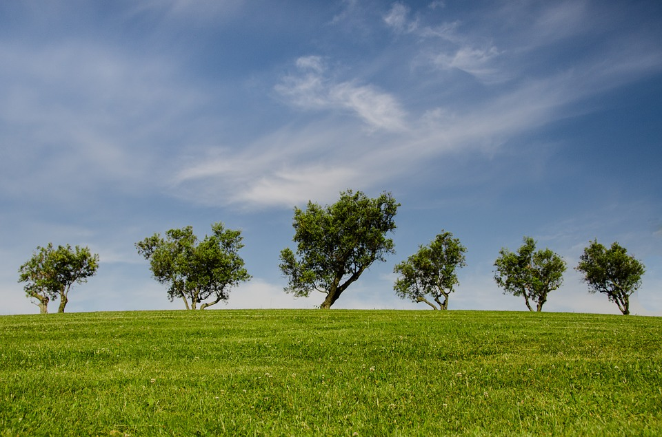 Trees, Hill, Green, Blue, Nature, Park, Eco
