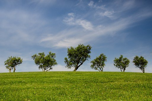 Trees, Hill, Green, Blue, Nature, Park
