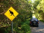 australia, kangaroo