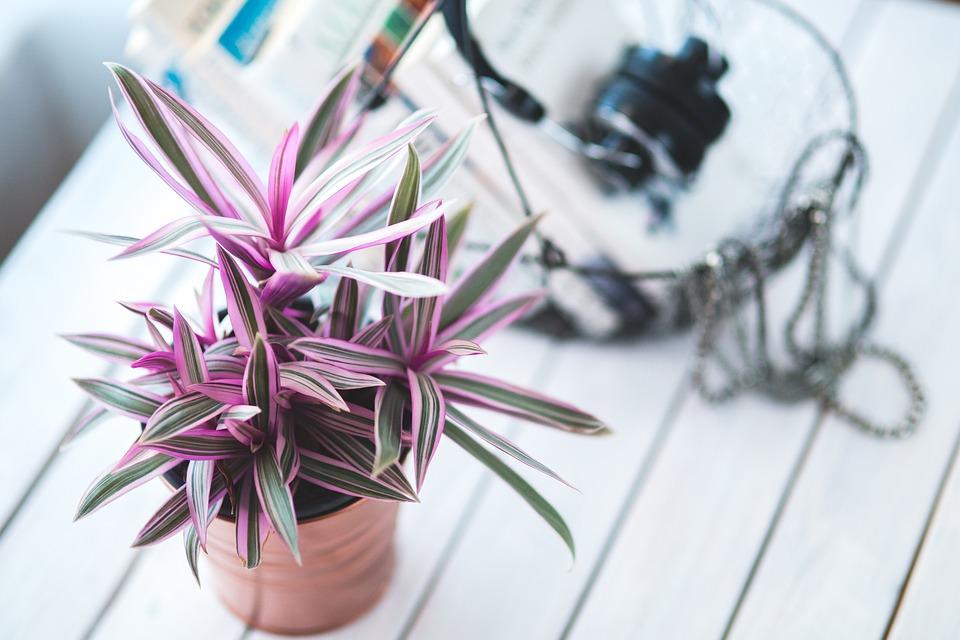plant houseplants indoor house decor