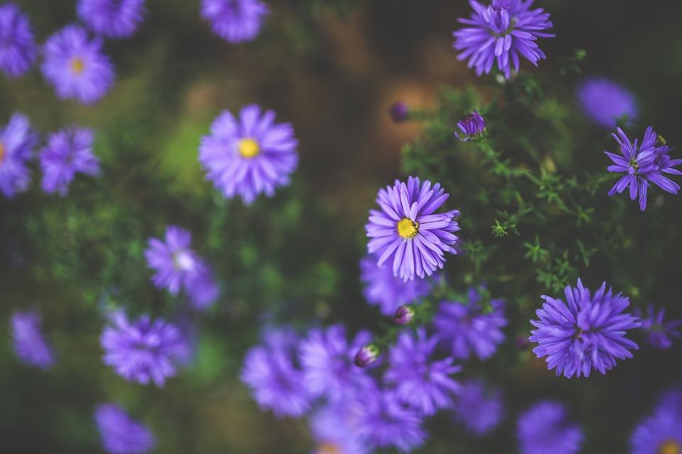 Free photo: Flower, Flowers, Purple, Violet - Free Image ...