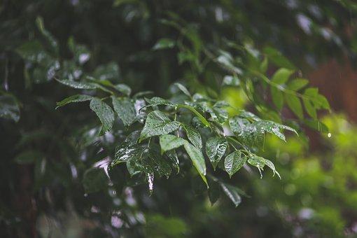 滴, 雨, 葉, 緑, 雨の日, 自然