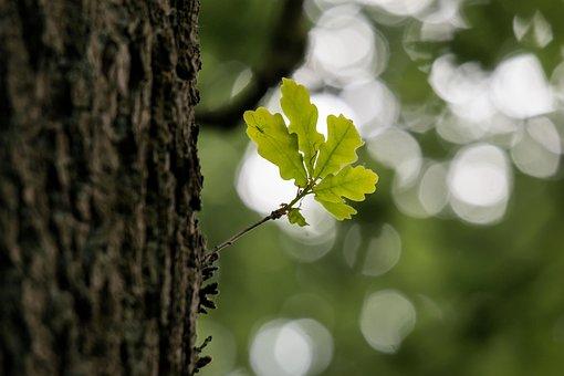 Oak Leaf Oak Leaf Spring Tree Stem Bark Gr