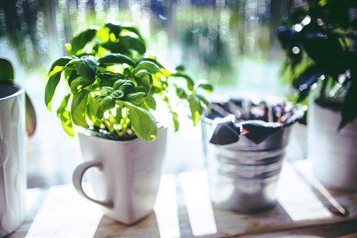 albahaca plantada en casa