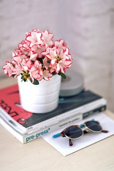 Azalea, White Pot, Sunglasses homely nature