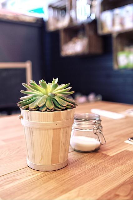 Plant Table Sugar · Free photo on Pixabay