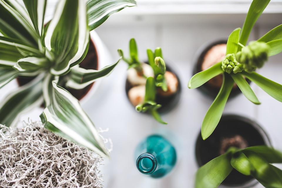 観葉, 植物, 花, ボトル, 水やり, 緑, 自然, ホワイト, 背景, クローズ アップ, クローズアップ