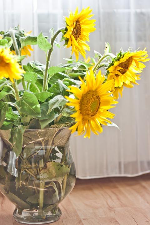 Sunflower Vase Yellow Free Photo On Pixabay