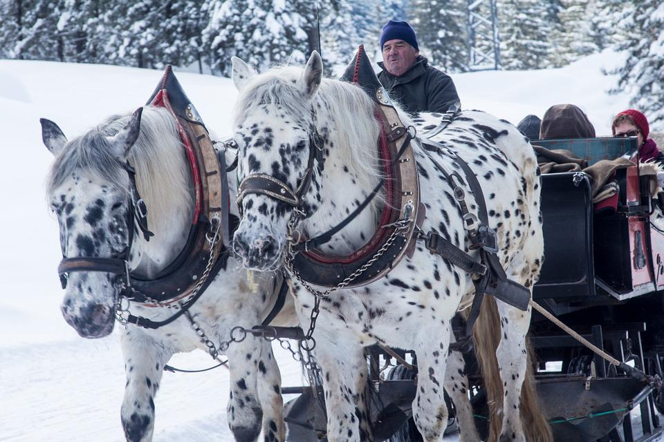 Winter, Schlitten, Pferde, Pferdeschlitten