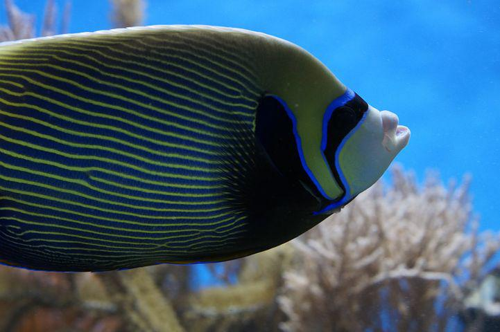 Pet fish pictures