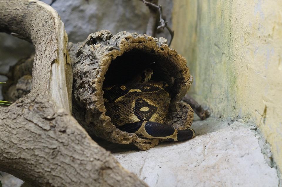 Terrarium Snake Hidden Free Photo On Pixabay
