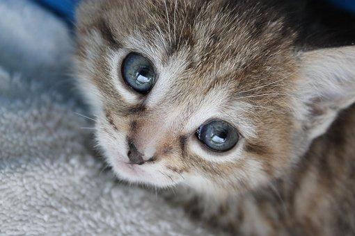 Kätzchen, Tier, Tiere, Haustier