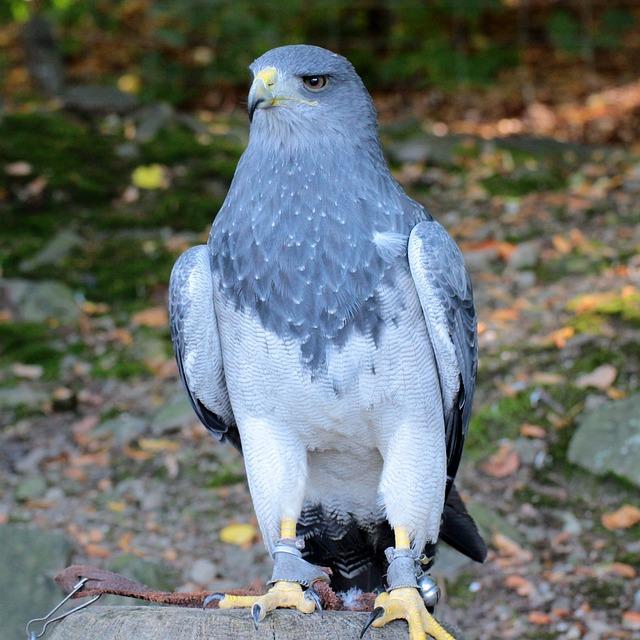 Vogel R 228 Uber Natur 183 Kostenloses Foto Auf Pixabay