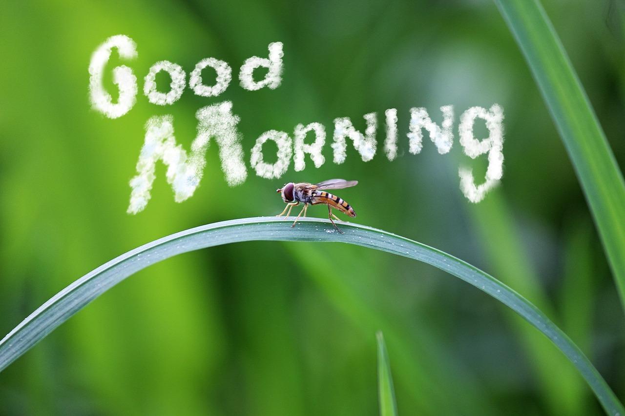 Надписью, открытки с добрым утром любимому природа