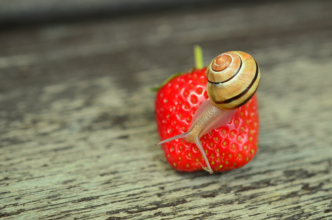 strawberry-799809_1280.jpg