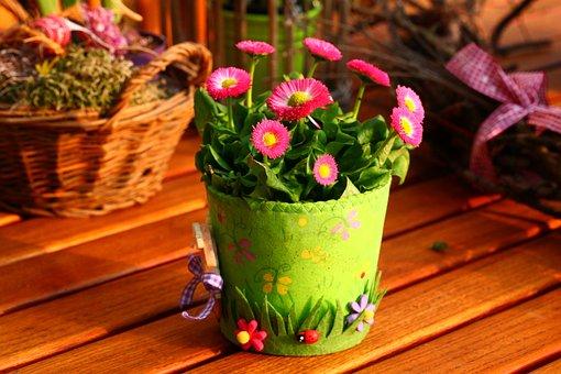 Spring, Decoration, Nature, Garden