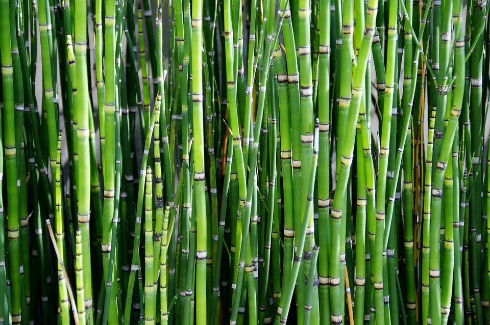 Bambus Pflanze Reed Kostenloses Foto Auf Pixabay