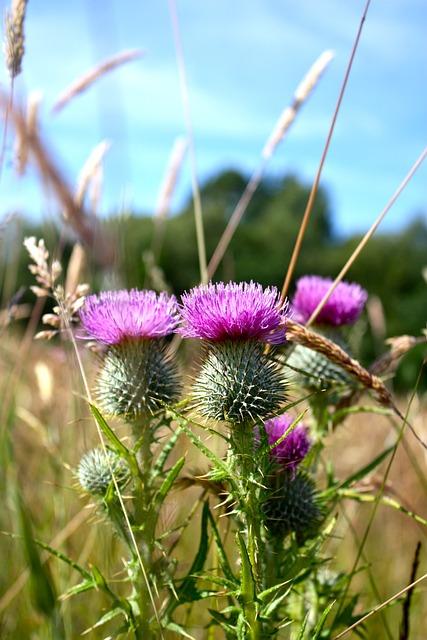 scotland nature landscape  u00b7 free photo on pixabay
