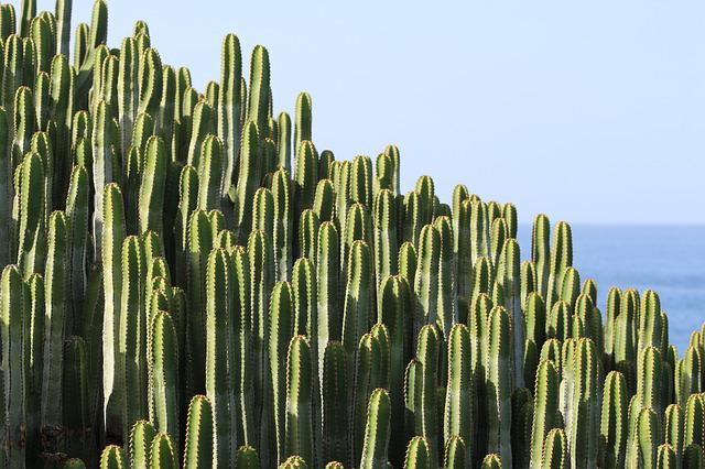 Cactus Plant Spur 183 Free Photo On Pixabay