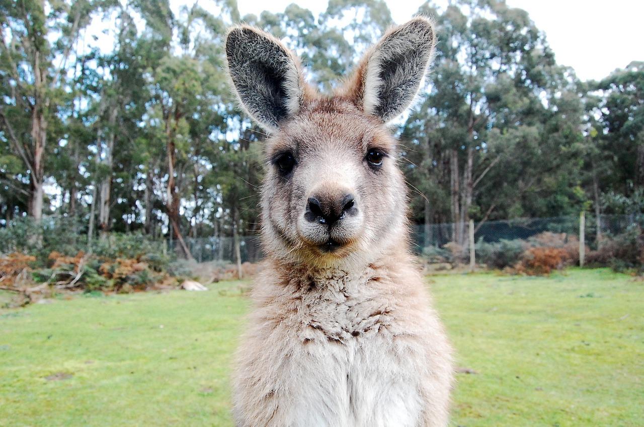 это создание австралийские животные фото с названиями балконный блок