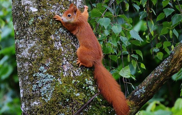 squirrel animal brown · free photo on pixabay