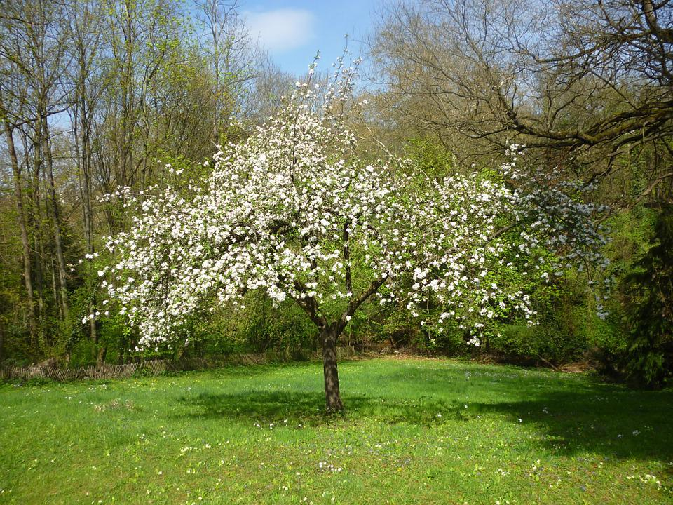 Genoeg Apple Boom Fruitboom · Gratis foto op Pixabay &EK53