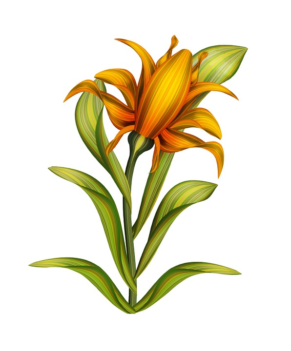 Flower Drawings: Flower Drawing Isolated · Free Image On Pixabay