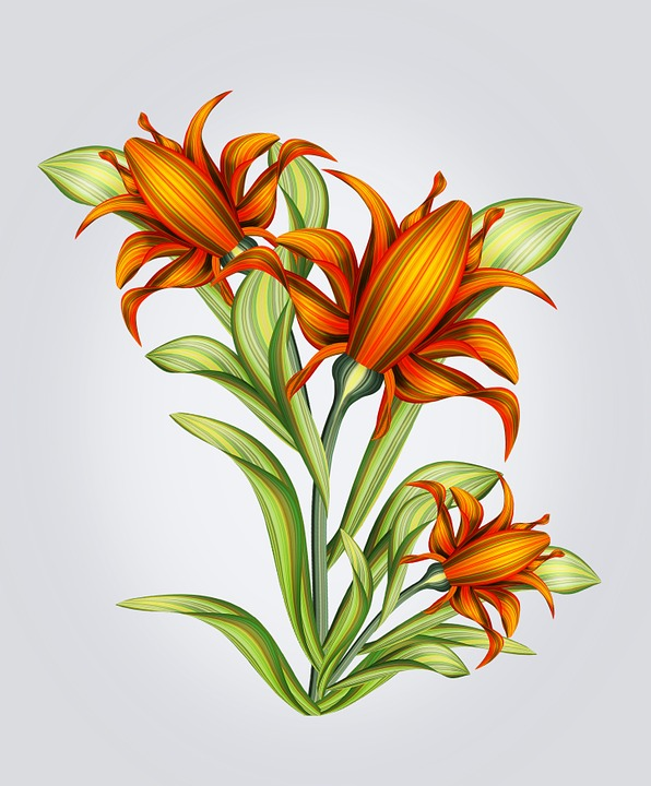 Flower Drawings: Free Illustration: Flower, Drawing, Isolated