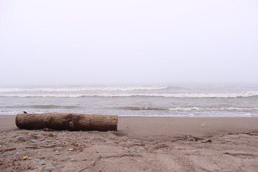 Wooden Log, Beach, Shore, Shoreline