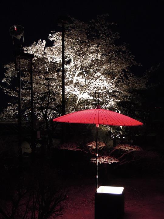 日本, 和, 城, 夜, 夜桜, 和風, 和傘, 夜景, 背景, 和柄, 伝統的, 自然, 春