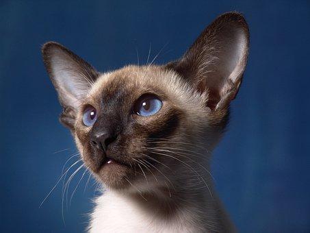 zadarmo malé Teen mačička videá