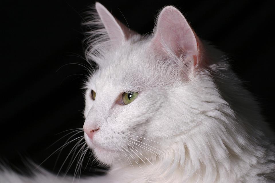 c5e899d82698 Γάτα Αγκύρας Τσιμέντο - Δωρεάν φωτογραφία στο Pixabay