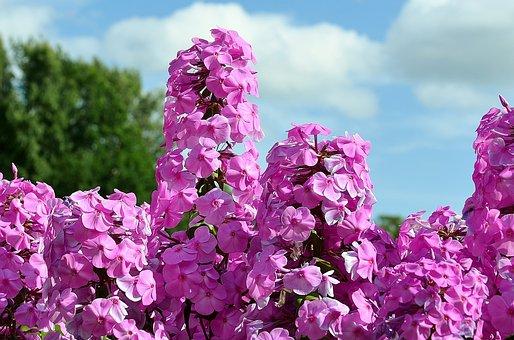 Bush Blüten Bilder · Pixabay · Kostenlose Bilder herunterladen